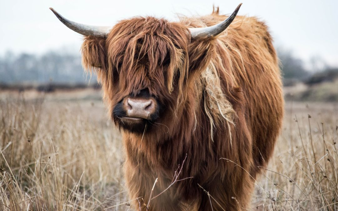 Comment ne pas raser un yack ?